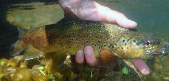 Mantenga el pez bajo el agua el mayor tiempo posible